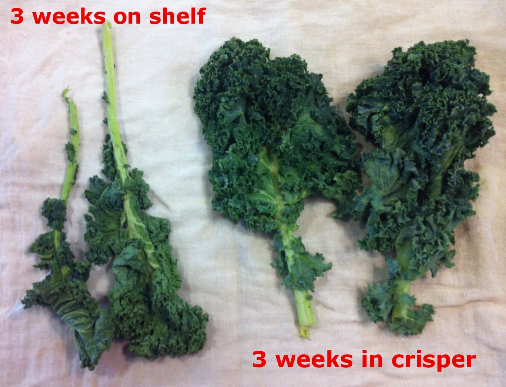 Kale.  Fresh after 3-weeks in crisper drawer.  Wilted after same time on refrigerator shelf.
